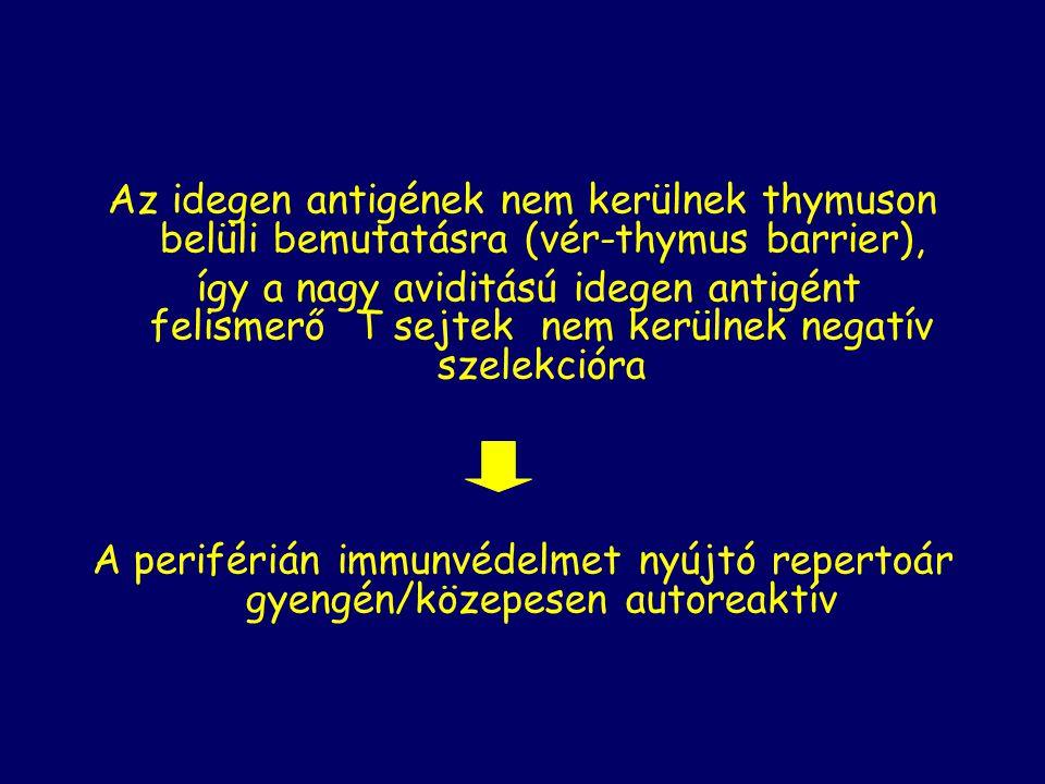 Az idegen antigének nem kerülnek thymuson belüli bemutatásra (vér-thymus barrier),
