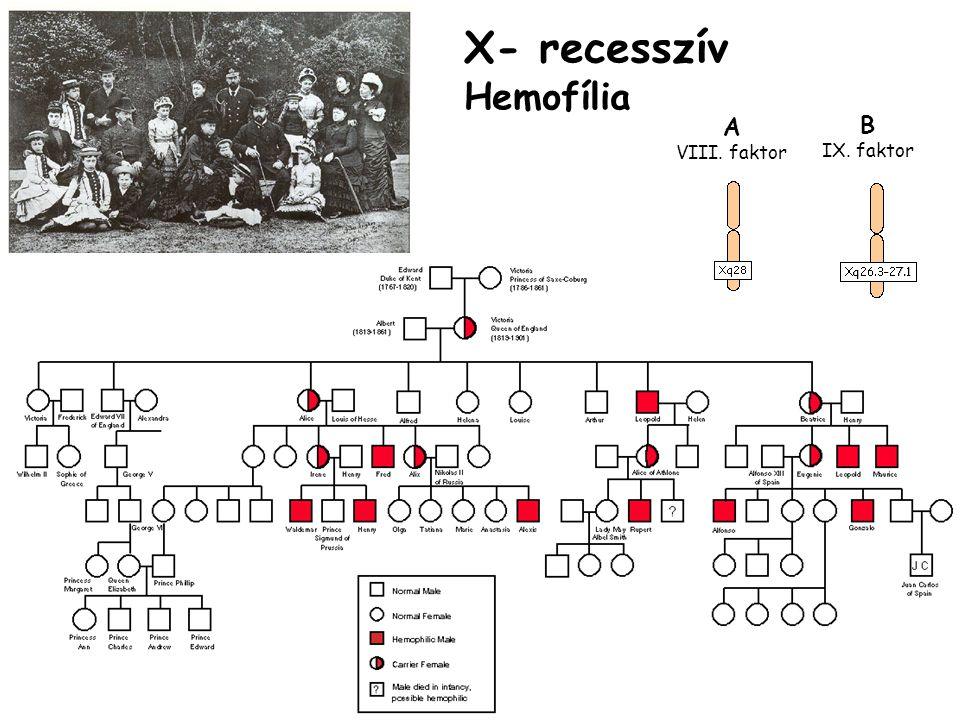 X- recesszív Hemofília B IX. faktor A VIII. faktor