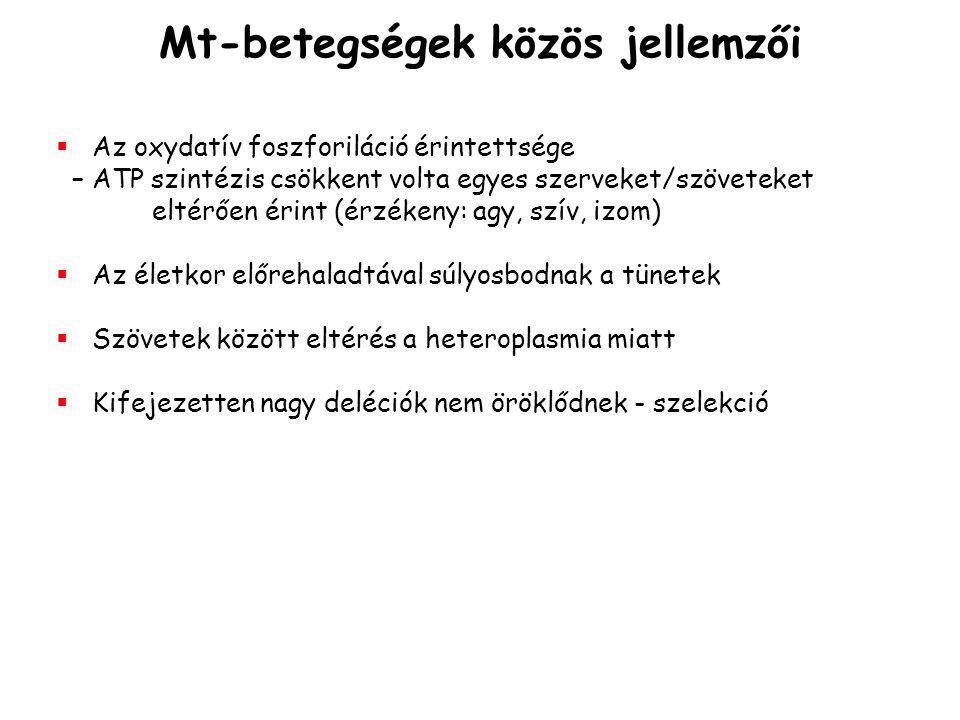 Mt-betegségek közös jellemzői