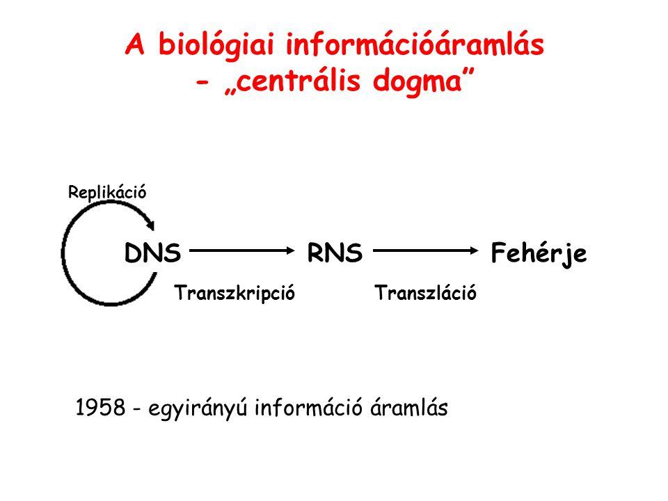 "A biológiai információáramlás - ""centrális dogma"