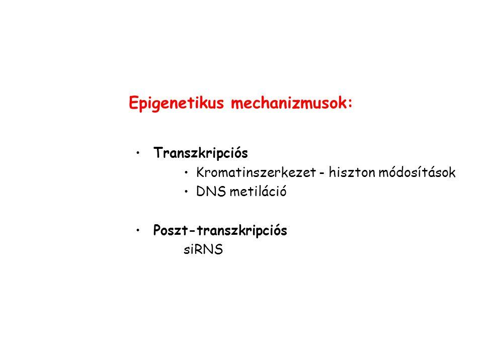 Epigenetikus mechanizmusok: