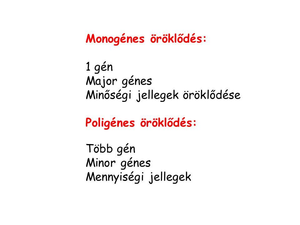 Monogénes öröklődés: 1 gén. Major génes. Minőségi jellegek öröklődése. Poligénes öröklődés: Több gén.