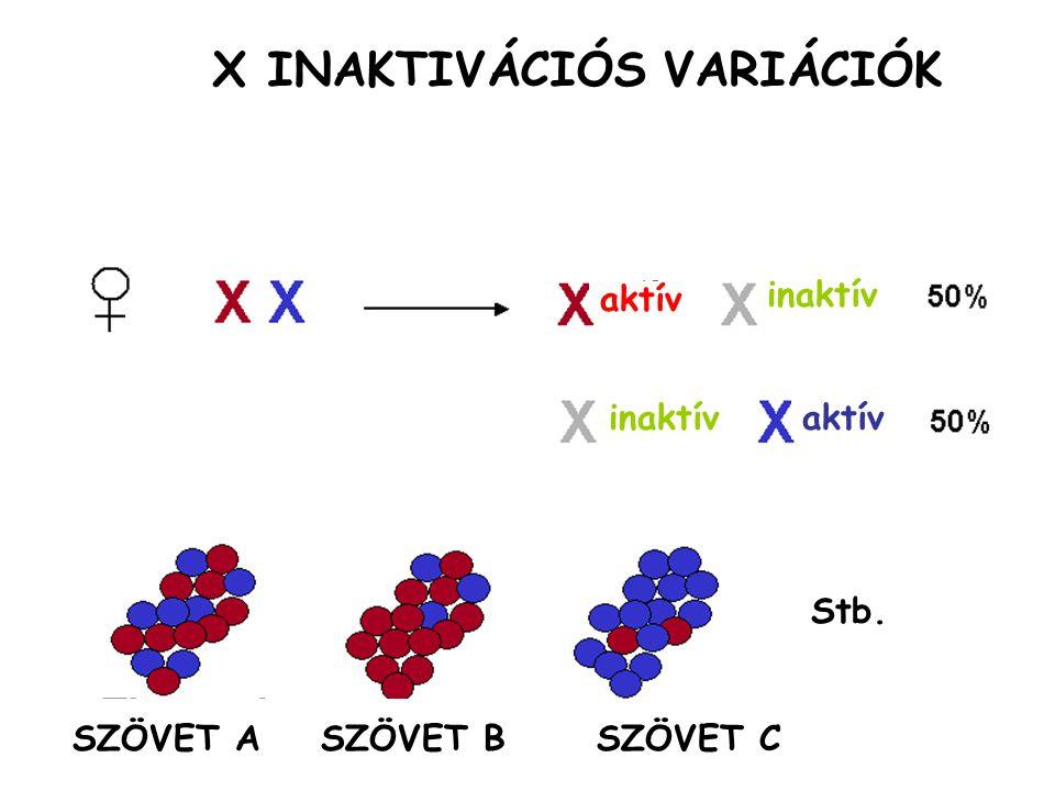 X INAKTIVÁCIÓS VARIÁCIÓK
