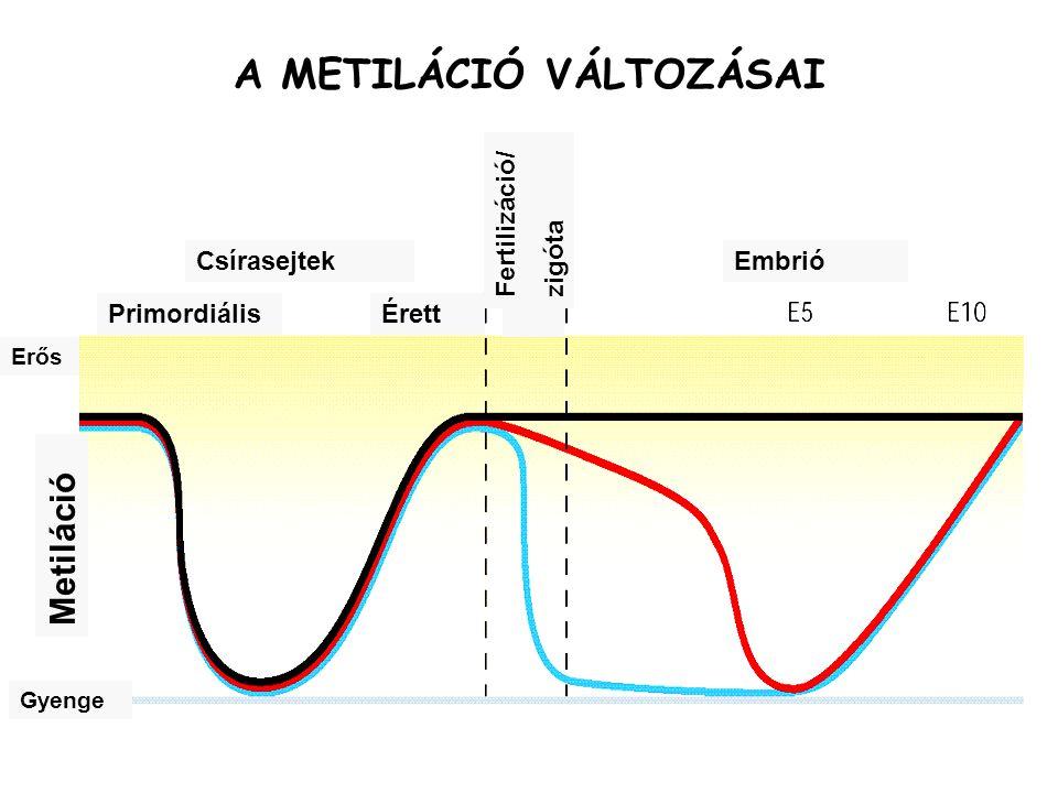 A METILÁCIÓ VÁLTOZÁSAI