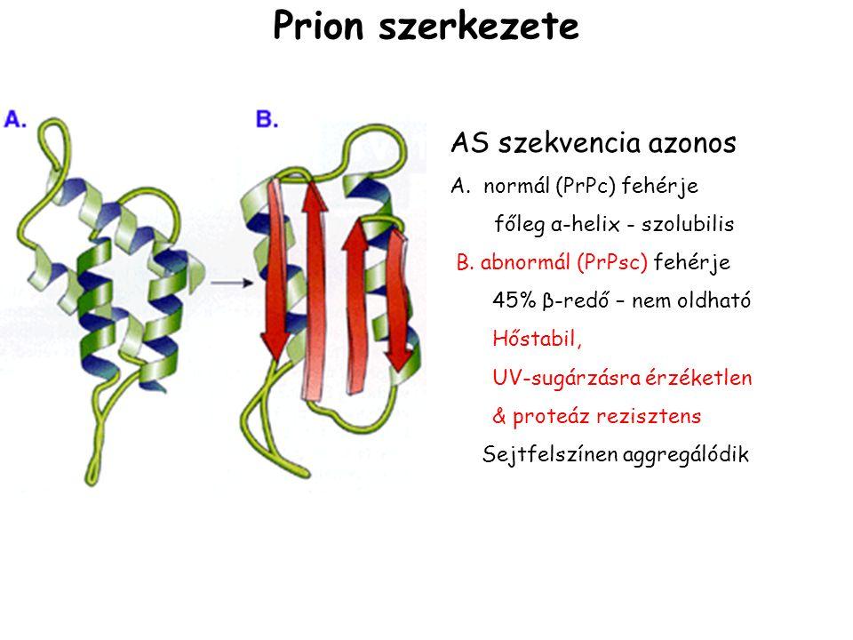 Prion szerkezete AS szekvencia azonos A. normál (PrPc) fehérje