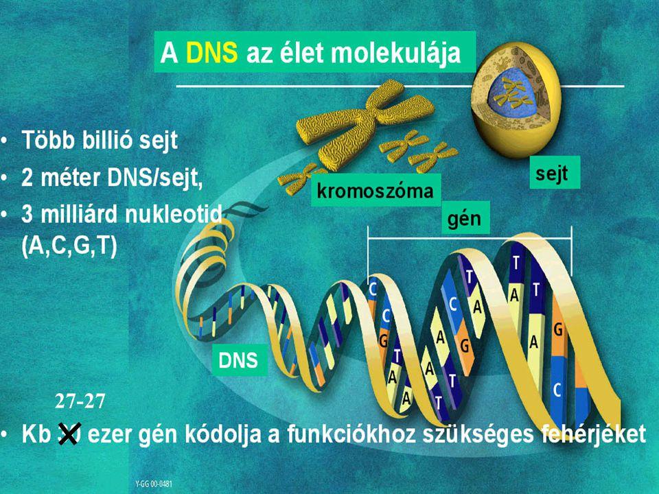 A genetikai információ hordozója elsősorban a DNS