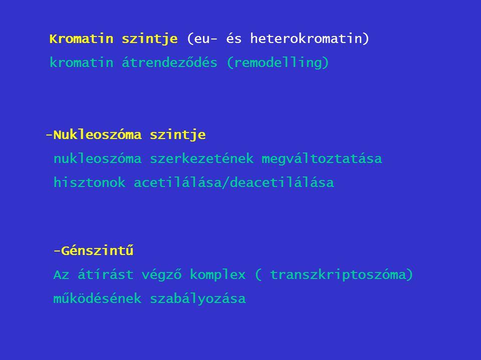 Kromatin szintje (eu- és heterokromatin)