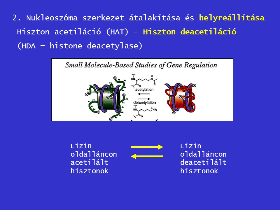 2. Nukleoszóma szerkezet átalakítása és helyreállítása