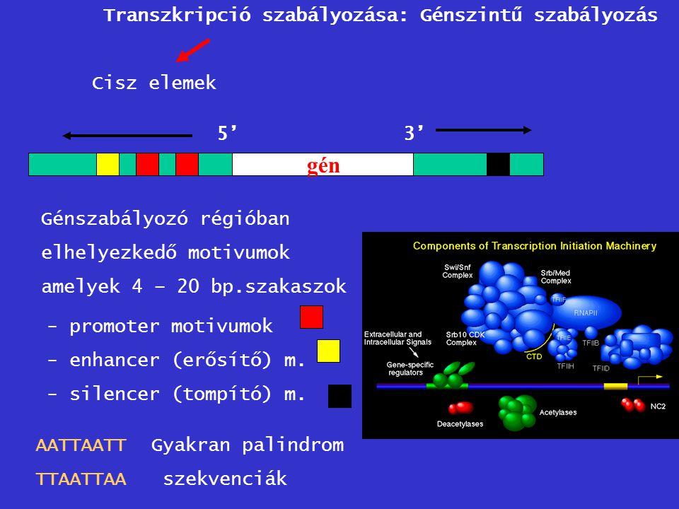 gén Transzkripció szabályozása: Génszintű szabályozás Cisz elemek 5'