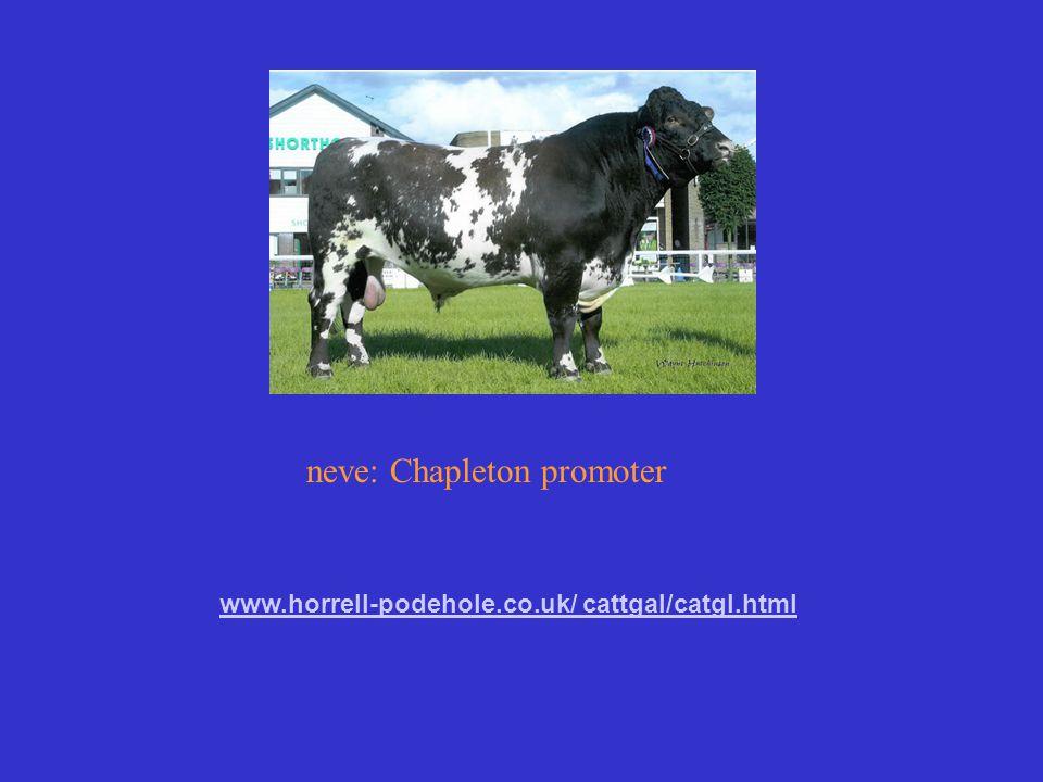 neve: Chapleton promoter