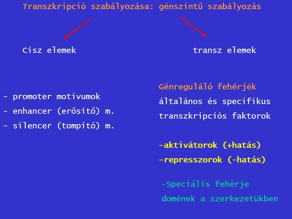 Transzkripció szabályozása: génszintű szabályozás