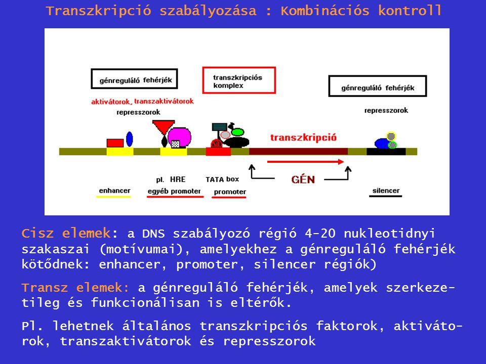 Transzkripció szabályozása : Kombinációs kontroll