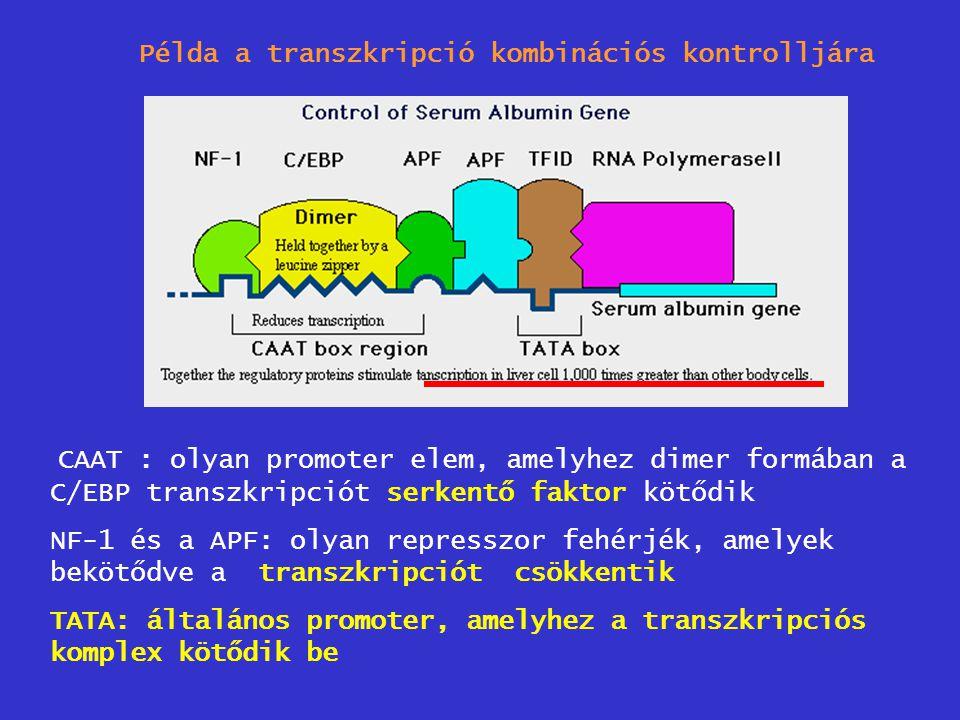 Példa a transzkripció kombinációs kontrolljára