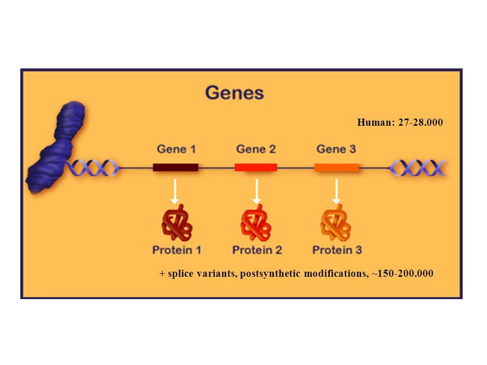 Human: 27-28.000 + splice variants, postsynthetic modifications, ~150-200.000