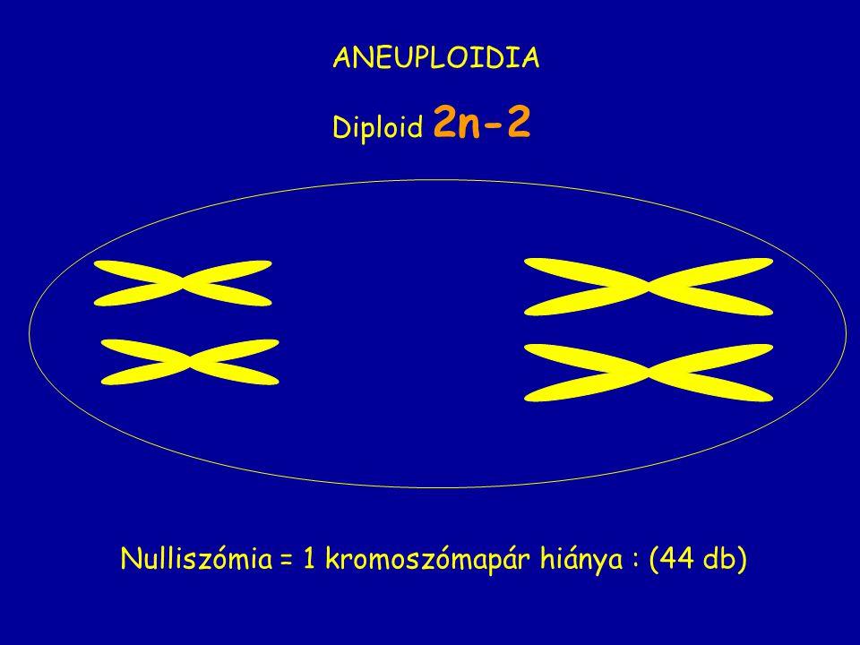 Nulliszómia = 1 kromoszómapár hiánya : (44 db)