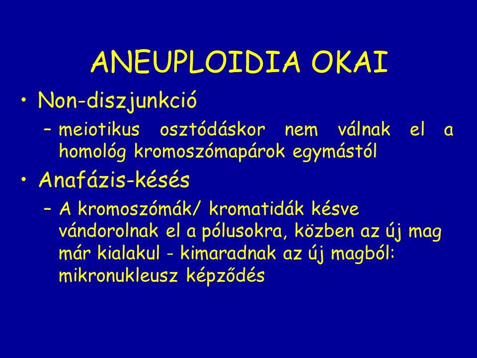 ANEUPLOIDIA OKAI Non-diszjunkció Anafázis-késés