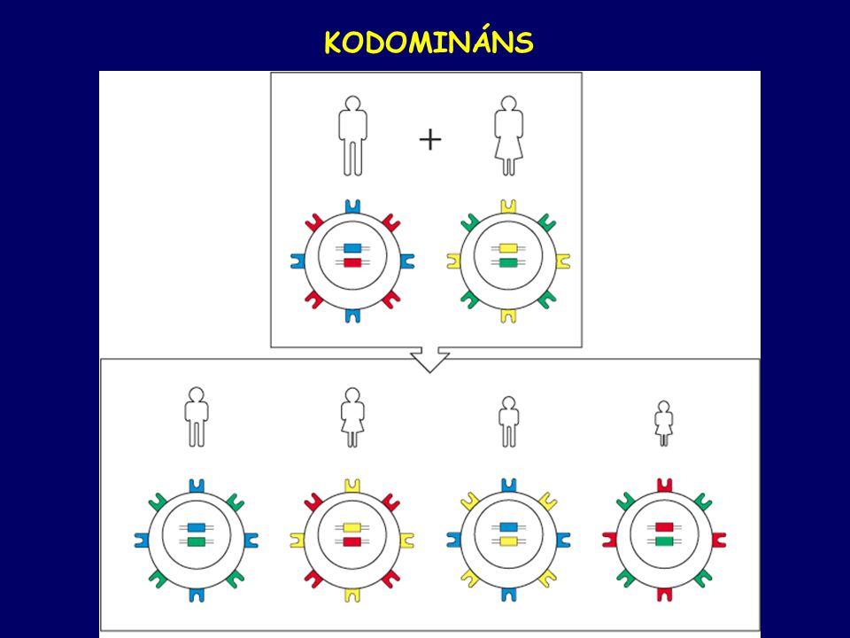 KODOMINÁNS