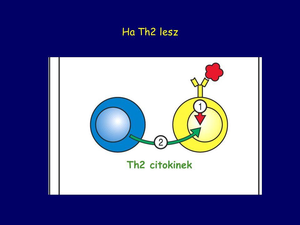 Ha Th2 lesz Th2 citokinek