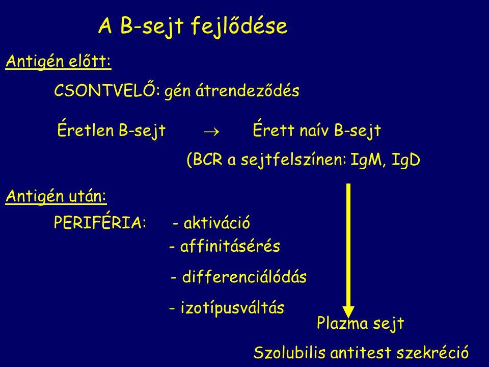 Szolubilis antitest szekréció