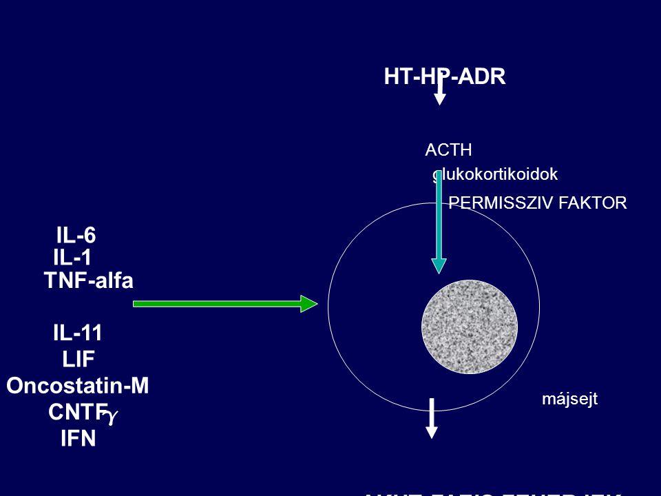 HT-HP-ADR IL-6 IL-1 TNF-alfa IL-11 LIF Oncostatin-M CNTF IFN