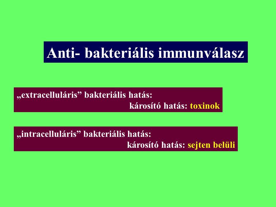 Anti- bakteriális immunválasz
