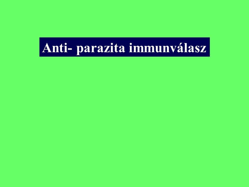 Anti- parazita immunválasz