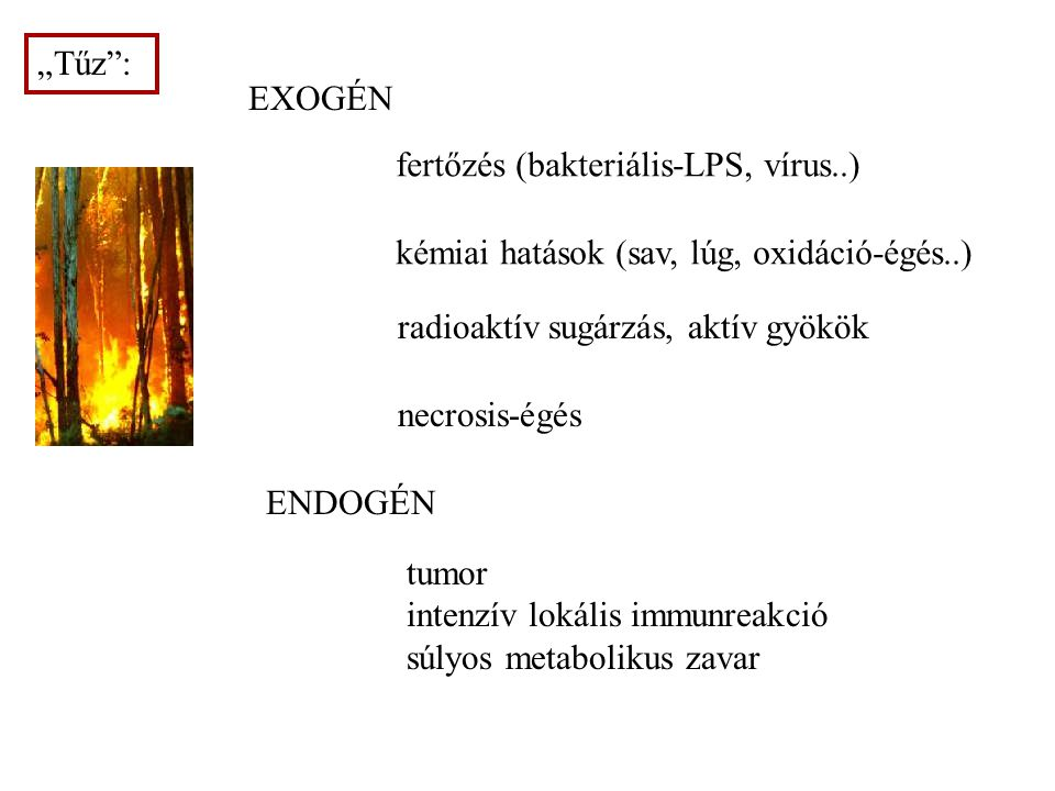 """""""Tűz : EXOGÉN. fertőzés (bakteriális-LPS, vírus..) kémiai hatások (sav, lúg, oxidáció-égés..) radioaktív sugárzás, aktív gyökök."""