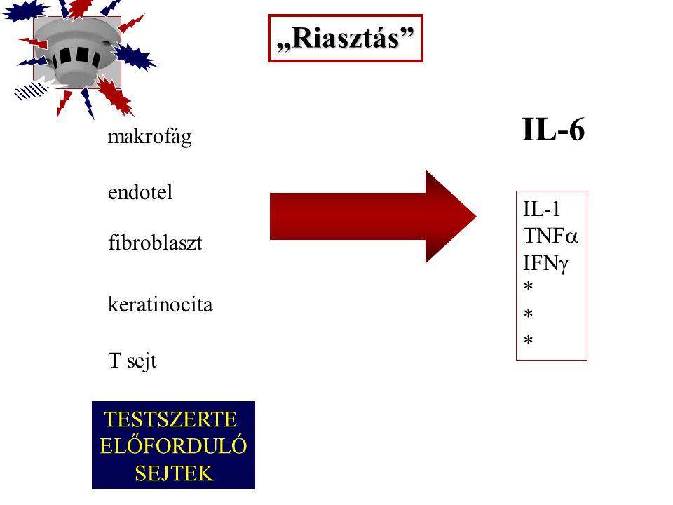 """IL-6 """"Riasztás makrofág endotel IL-1 TNFa IFNg fibroblaszt *"""