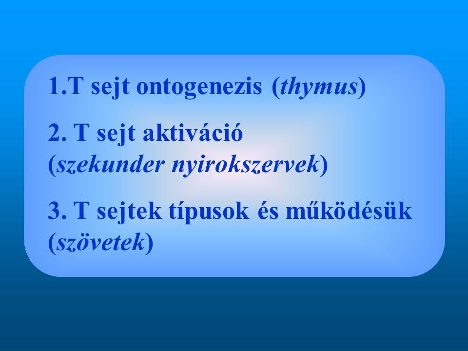 1.T sejt ontogenezis (thymus)