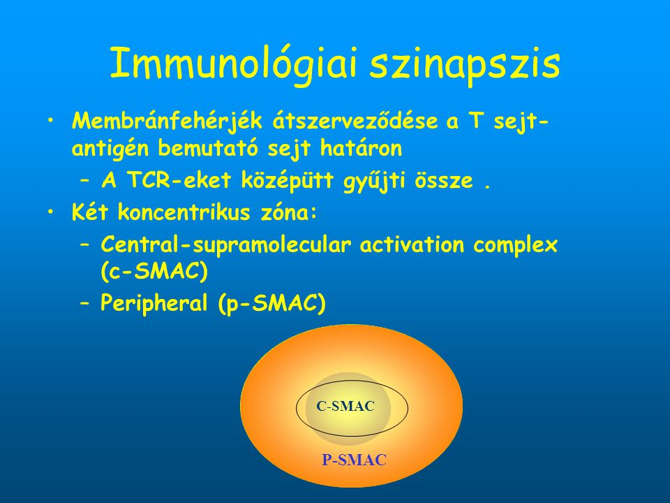 Immunológiai szinapszis