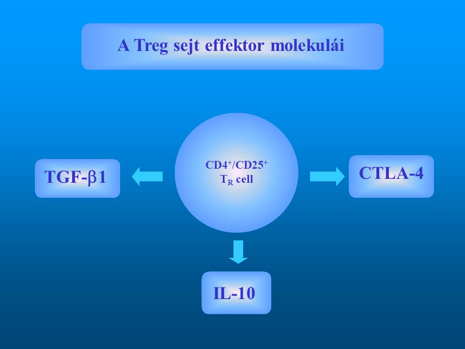 A Treg sejt effektor molekulái