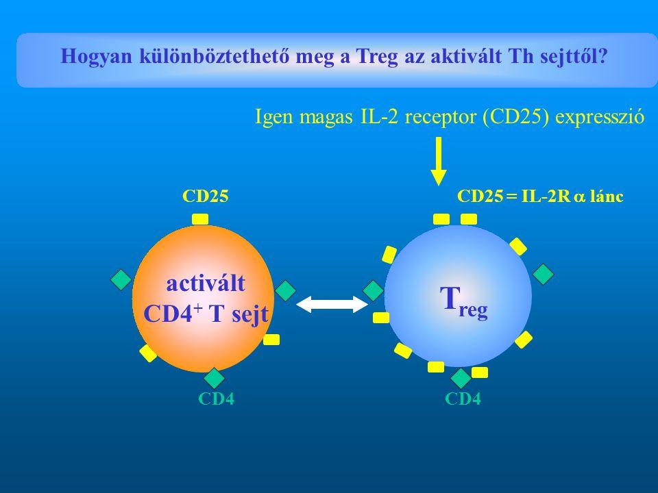 Hogyan különböztethető meg a Treg az aktivált Th sejttől