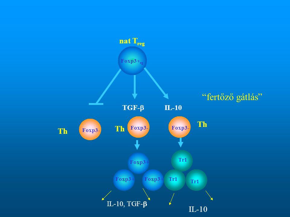 fertőző gátlás nat Treg Th Th Th IL-10 TGF- IL-10 IL-10, TGF-