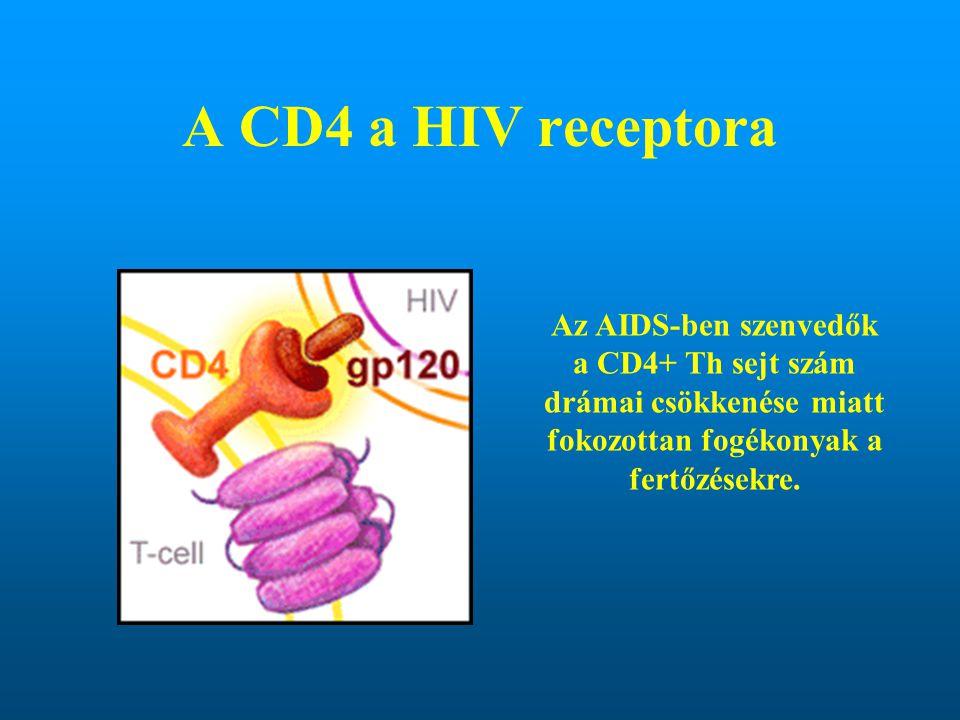 A CD4 a HIV receptora Az AIDS-ben szenvedők a CD4+ Th sejt szám drámai csökkenése miatt fokozottan fogékonyak a fertőzésekre.