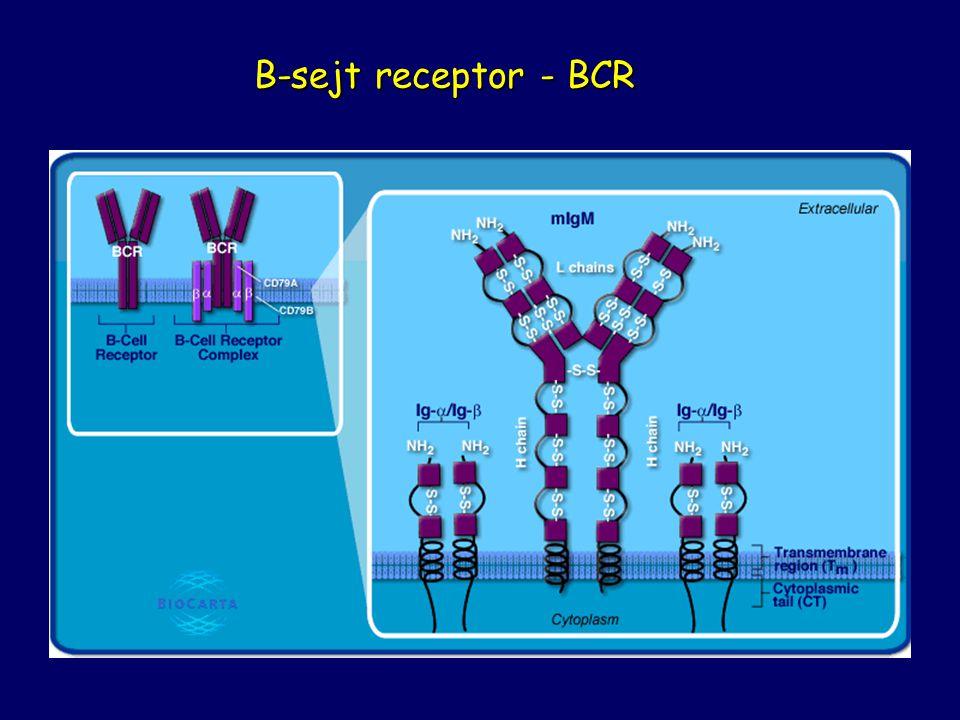 B-sejt receptor - BCR