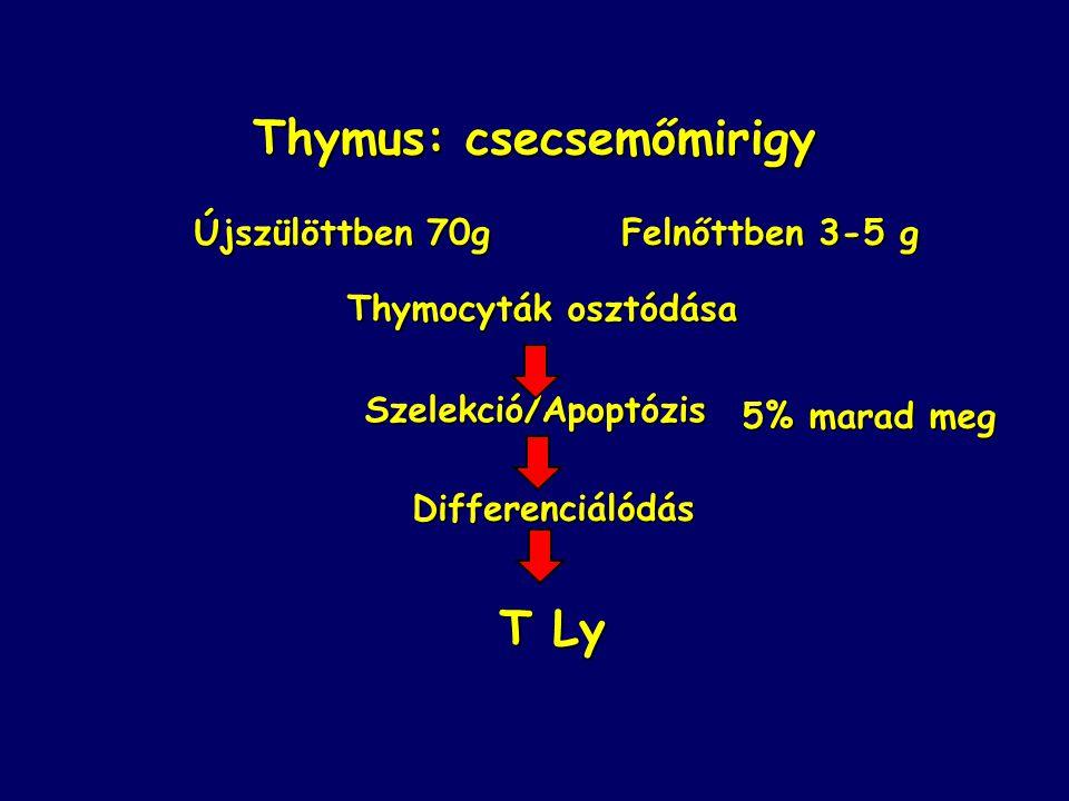 Thymus: csecsemőmirigy