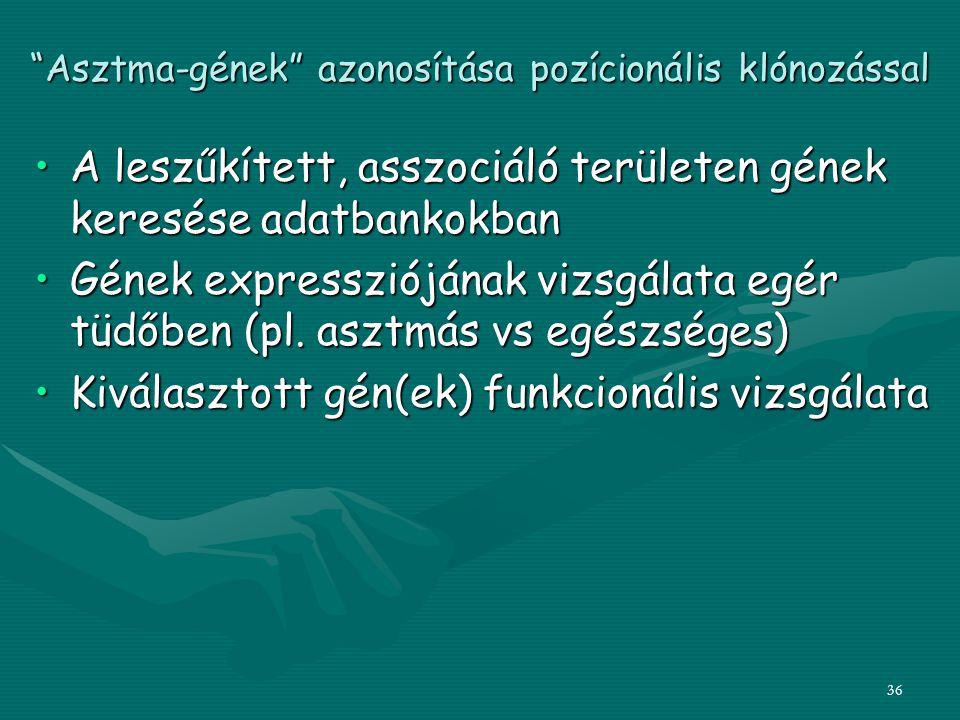 Asztma-gének azonosítása pozícionális klónozással