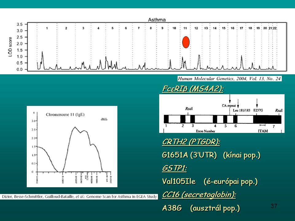 FcεRIβ (MS4A2): CRTH2 (PTGDR): G1651A (3'UTR) (kínai pop.) GSTP1: Val105Ile (é-európai pop.)