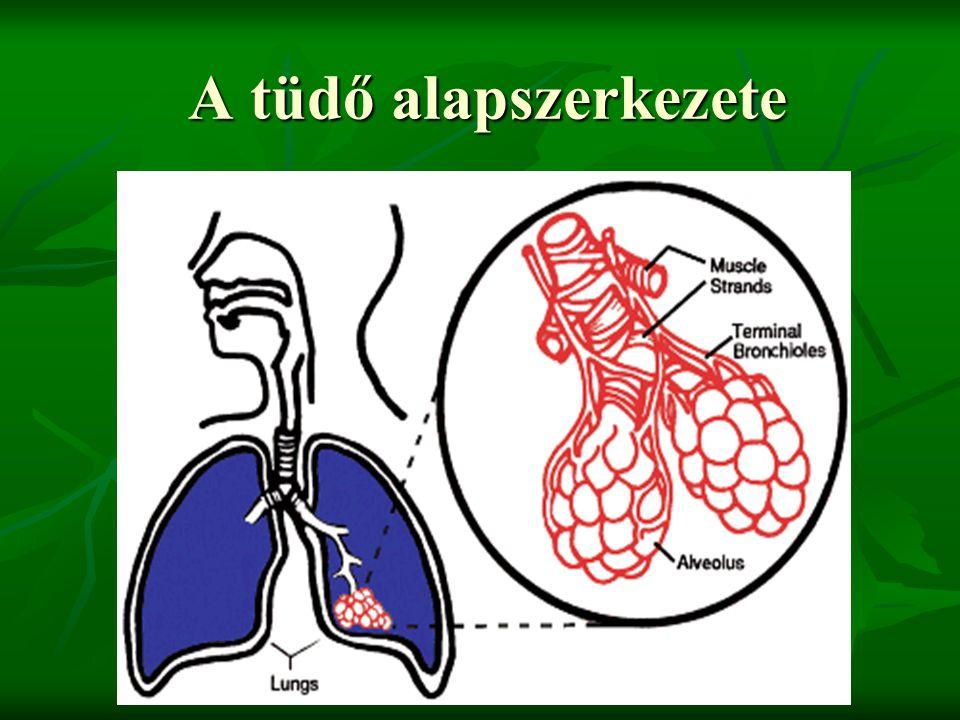 A tüdő alapszerkezete
