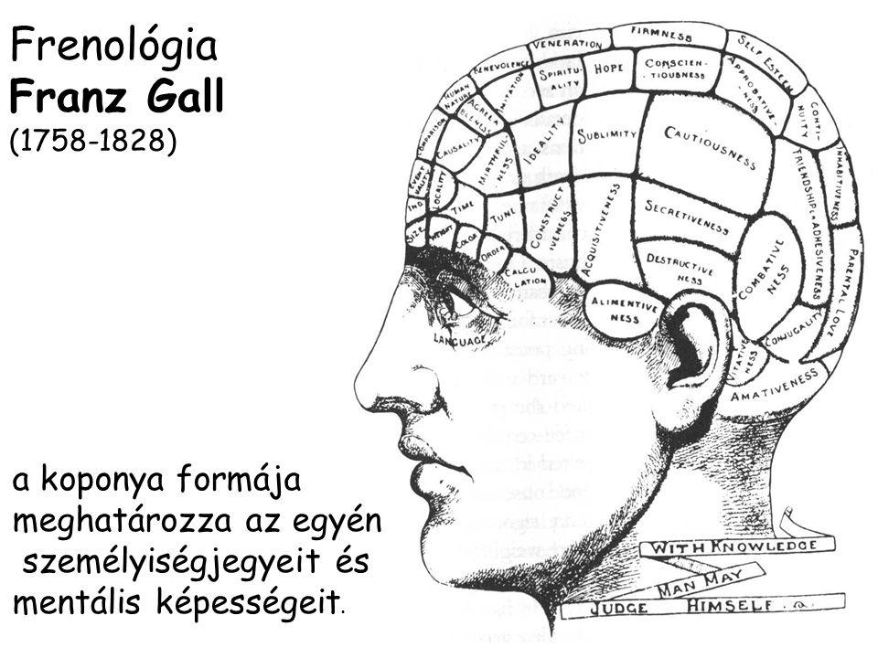 Frenológia Franz Gall a koponya formája meghatározza az egyén