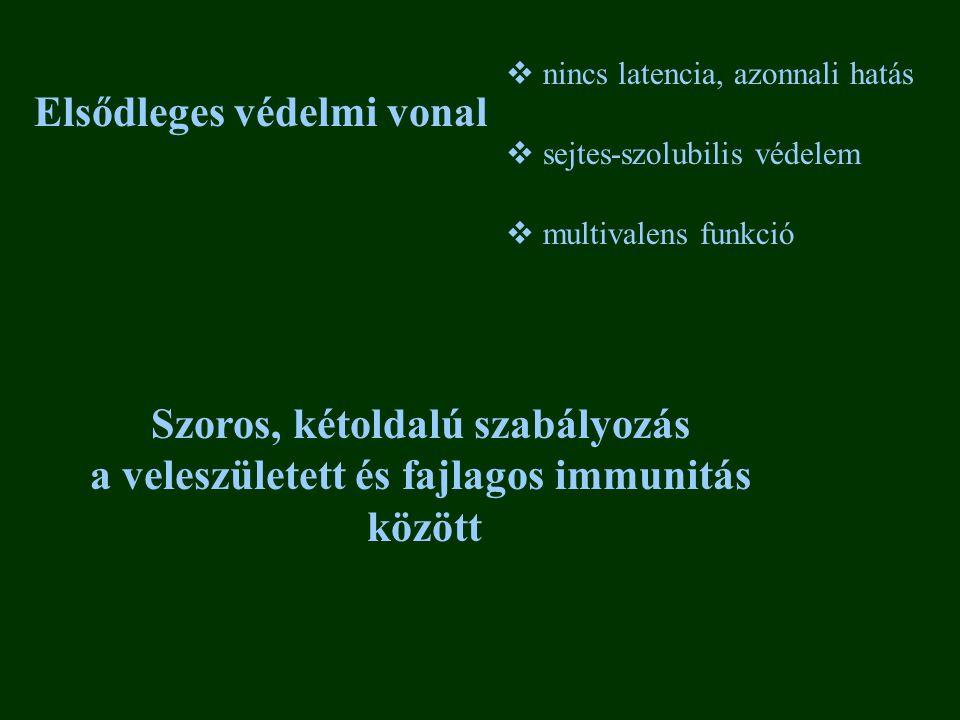 Szoros, kétoldalú szabályozás a veleszületett és fajlagos immunitás
