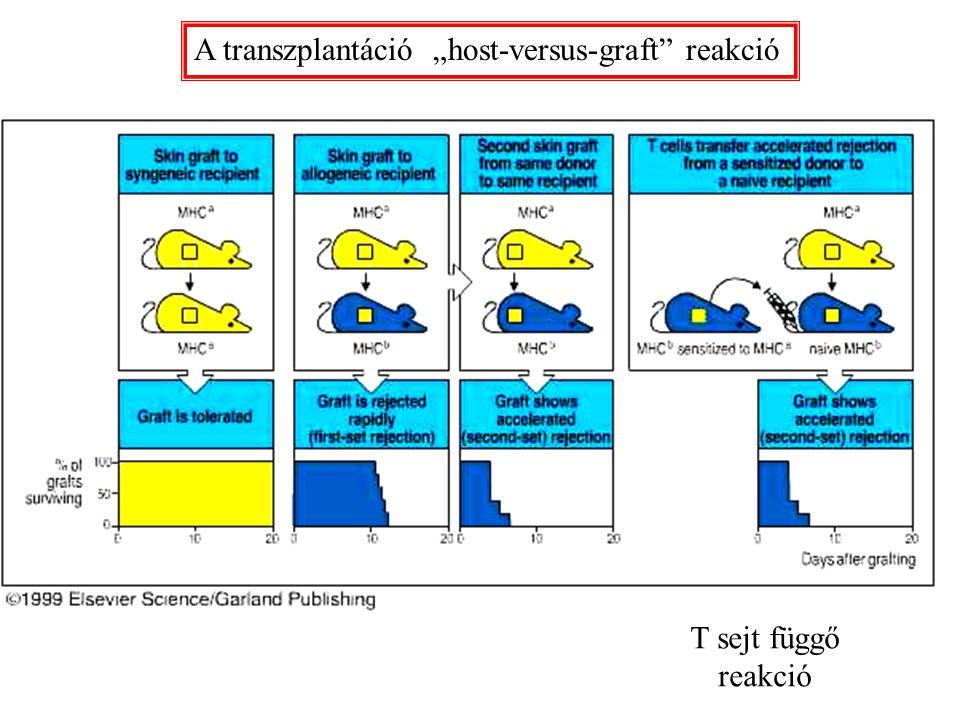"""A transzplantáció """"host-versus-graft reakció"""