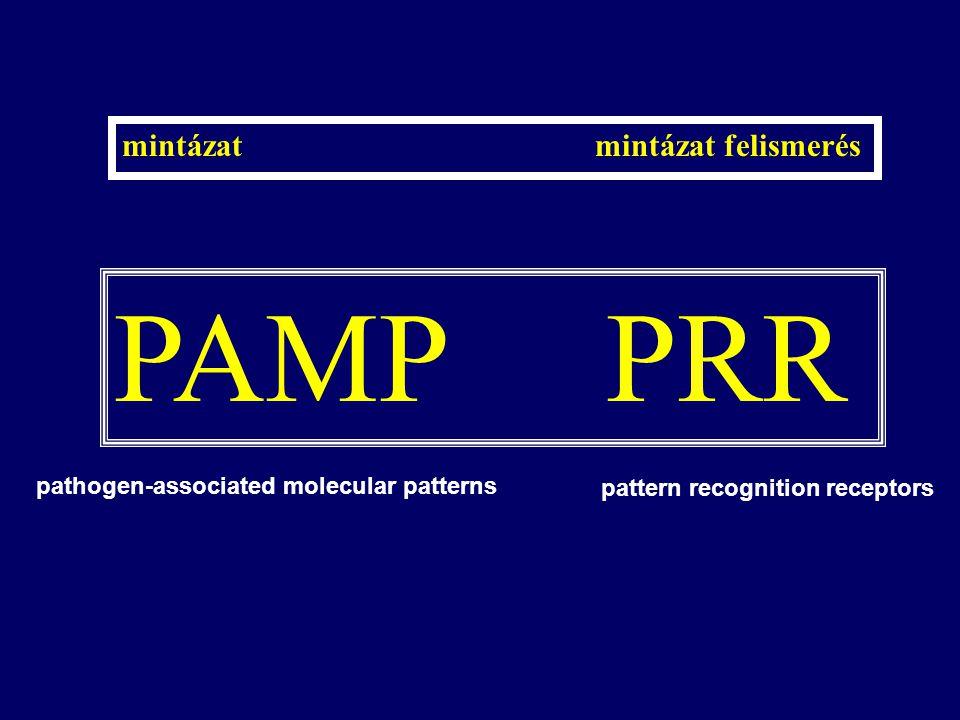 PAMP PRR mintázat mintázat felismerés