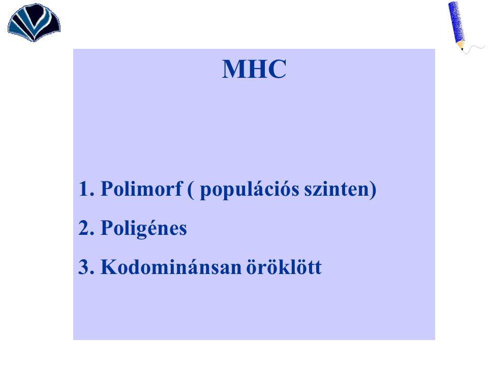 MHC 1. Polimorf ( populációs szinten) 2. Poligénes