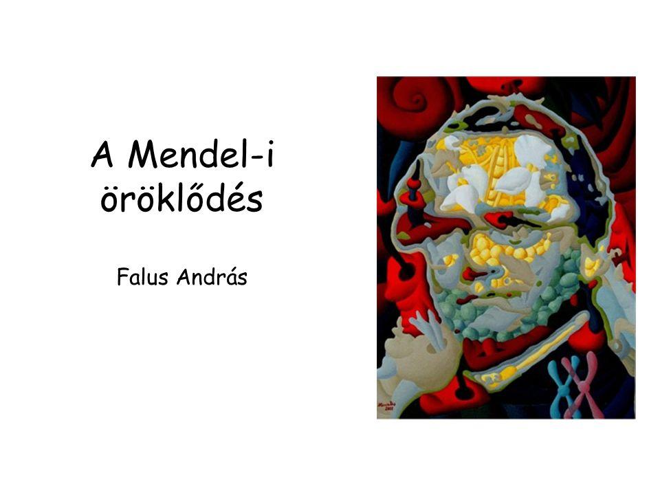 A Mendel-i öröklődés Falus András