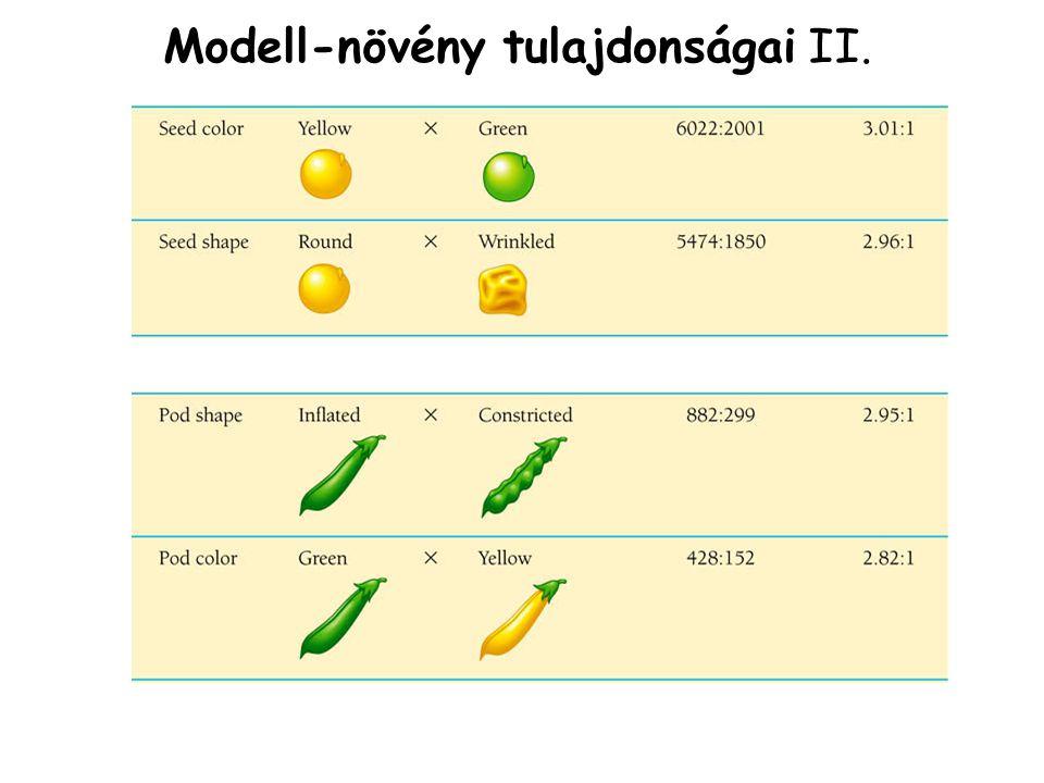Modell-növény tulajdonságai II.