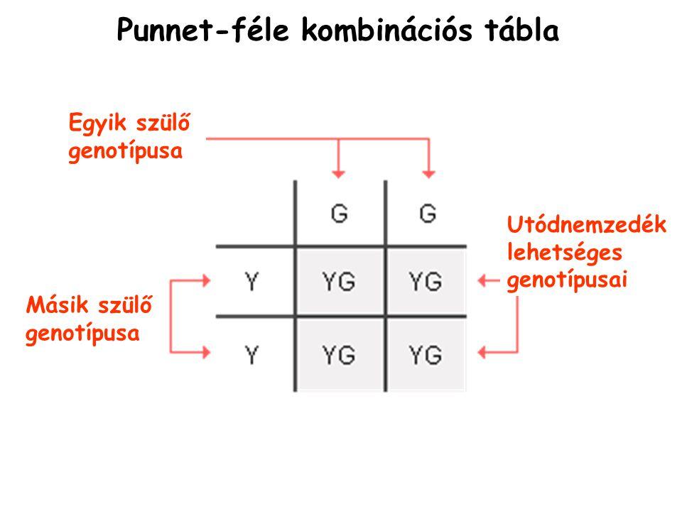 Punnet-féle kombinációs tábla