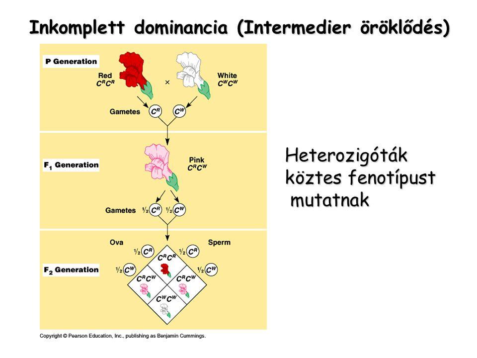 Inkomplett dominancia (Intermedier öröklődés)