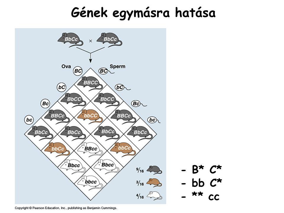 Gének egymásra hatása - B* C* - bb C* - ** cc