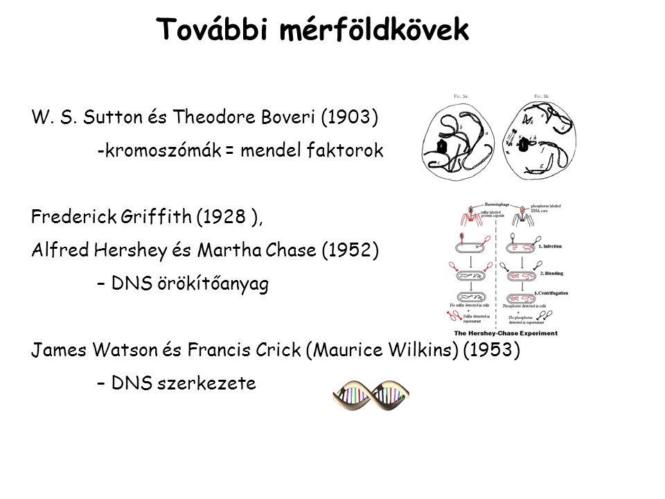 További mérföldkövek W. S. Sutton és Theodore Boveri (1903)